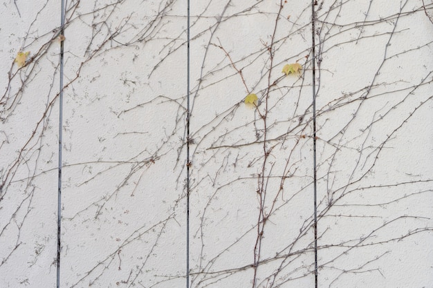 Il muro è fatto di mattoni e poi dipinto di bianco. ci sono piante rampicanti sulla parete sinistra.