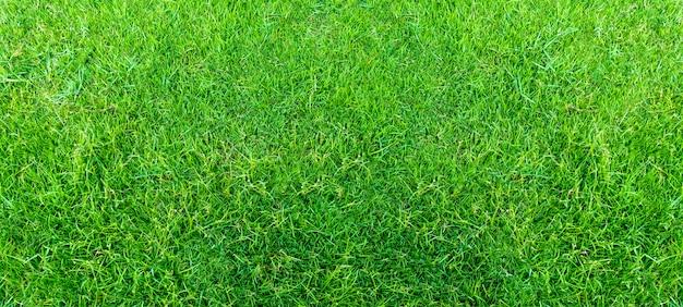 Il paesaggio del campo di erba nel parco pubblico verde usa come sfondo o contesto naturale. trama di erba verde da un campo.