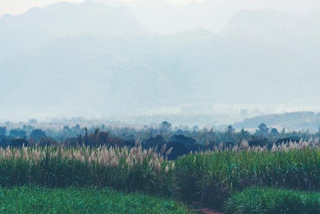 Il paesaggio di montagna tropicale, foresta tropicale in asia