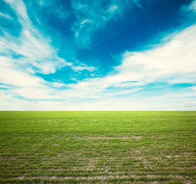 Il panorama del campo verde e del cielo nuvoloso