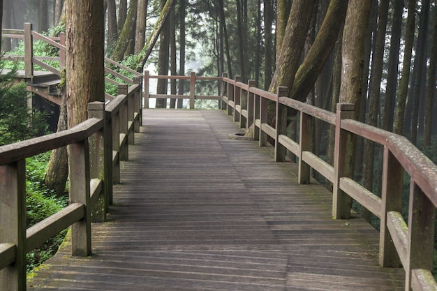 Il passaggio pedonale da legno nella foresta di alishan al parco nazionale di alishan, taiwan.