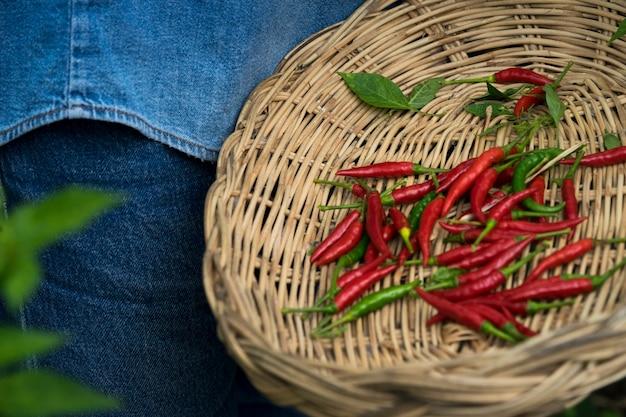 Il pepe di caienna è un famoso sapore piccante. il cibo è tailandese