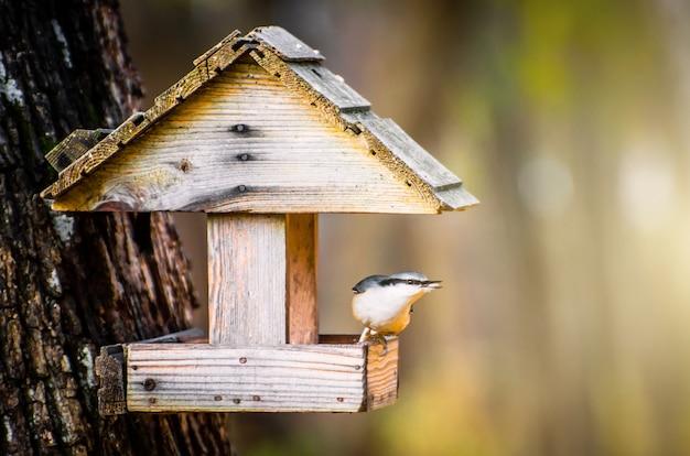 Il picchio muratore dell'uccello nella mangiatoia per uccelli viene nutrito con semi