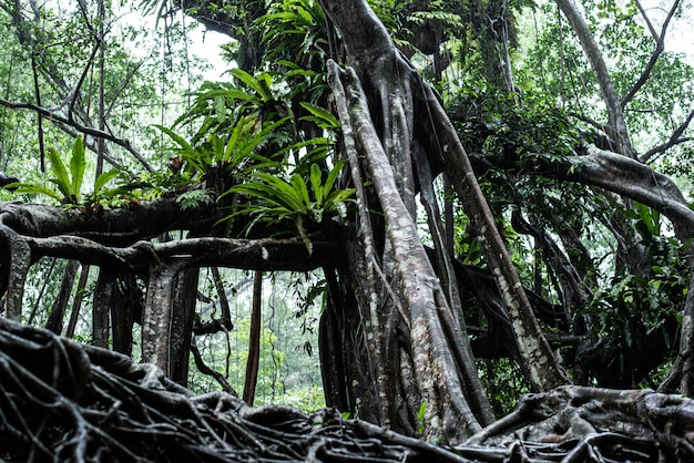 Il piccolo amazzone in fang nel canale di sang nae tailandia