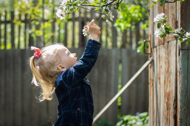Il piccolo bambino biondo tira la sua mano ad un ramo di ciliegia di fioritura nel giardino.