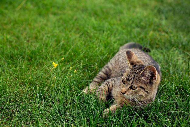 Il piccolo gattino si trova nell'erba