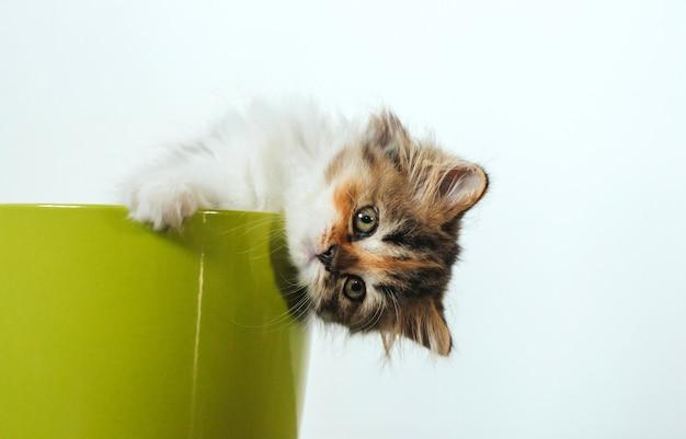 Il piccolo gattino tricolore allegro si siede in un vaso di fiore verde