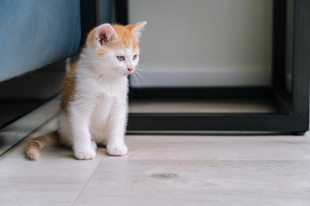 Il piccolo gatto rosso sveglio resta sul pavimento di legno con la finestra. giovane carino piccolo gattino rosso. gattino ginger gioca a casa. simpatici animali domestici divertenti. animali domestici e giovani gattini. fuoco selettivo.