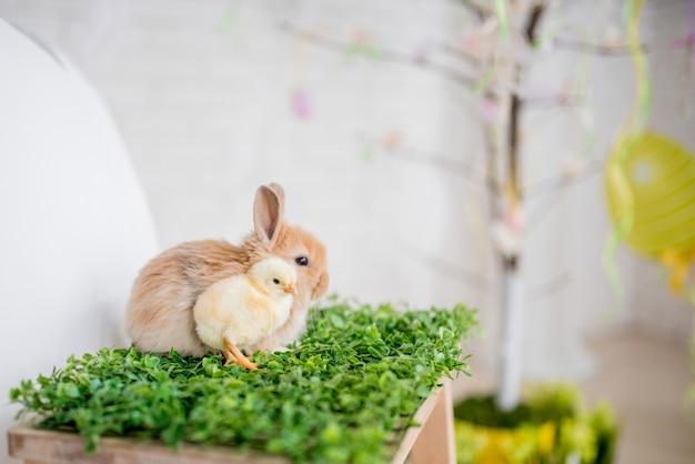 Il piccolo pollo e coniglio giocano sull'erba verde