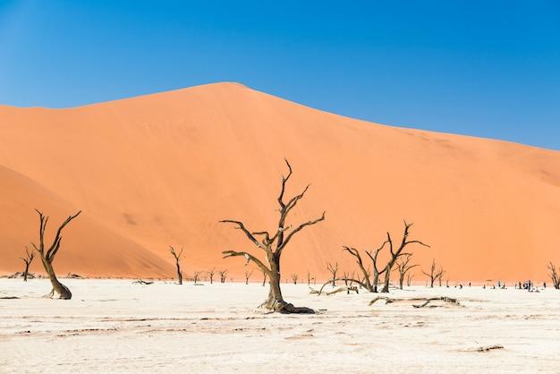 Il pittoresco sossusvlei e deadvlei, argilla e saline con alberi di acacia intrecciati circondati da maestose dune di sabbia.