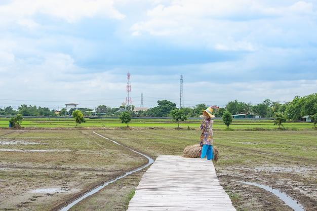Il ponte di legno e il riflesso del sole con le nuvole di pioggia sul cielo nelle risaie.