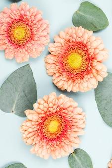 Il primo piano del fiore del gerbera e le foglie di forma del cuore sul contesto blu