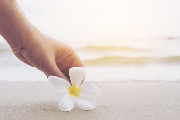 Il primo piano della signora sta mantenendo il fiore di plumeria sulla spiaggia di sabbia