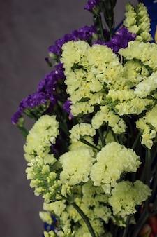 Il primo piano di bei fiori gialli e porpora del limonium contro la parete grigia