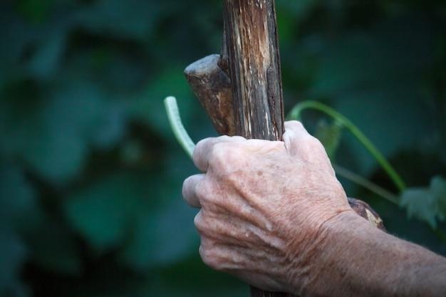 Il primo piano di una mano dell'uomo o della donna molto vecchia sta tenendo un vecchio bastone nodoso invece di una canna