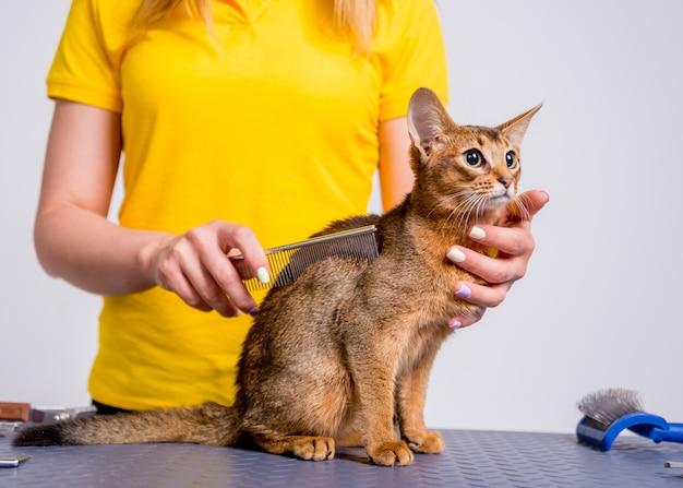 Il professionista si prende cura di un gatto abissino in un salone specializzato