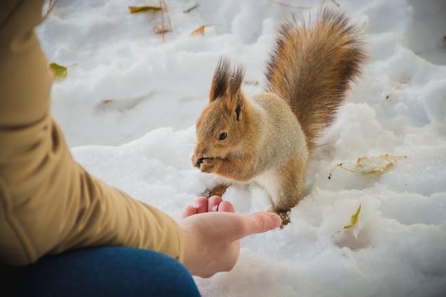 Il ragazzo nutre uno scoiattolo con i dadi