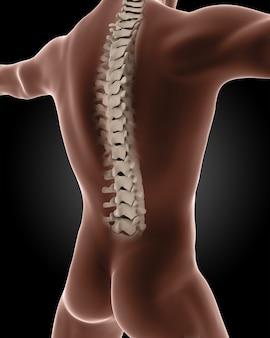 Il rendering 3d di uno scheletro medico di sesso maschile con un primo piano sul retro