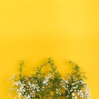 Il respiro del bambino fiorisce e foglie contro fondo giallo