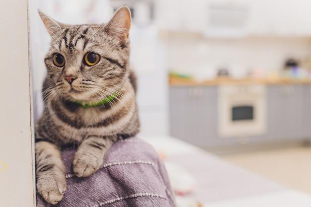 Il ritratto di un bel gatto è seduto su un divano.