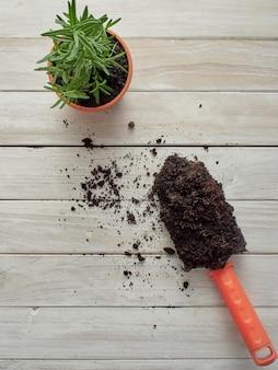 Il rosmarino è piantato in vasi con attrezzature da giardinaggio su un tavolo di legno bianco.