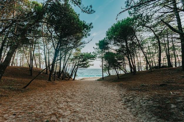 Il sentiero per la spiaggia circondato da alberi