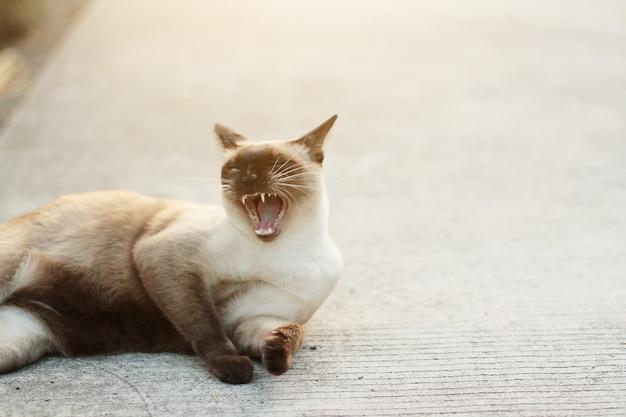 Il simpatico gatto siamese si diverte e dorme sul pavimento di cemento