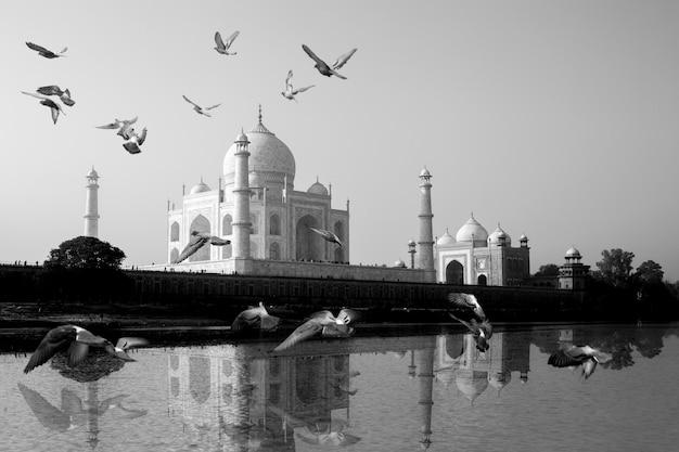 Il taj mahal rifletteva nella vista del fiume yamuna con uccelli che volavano attraverso.