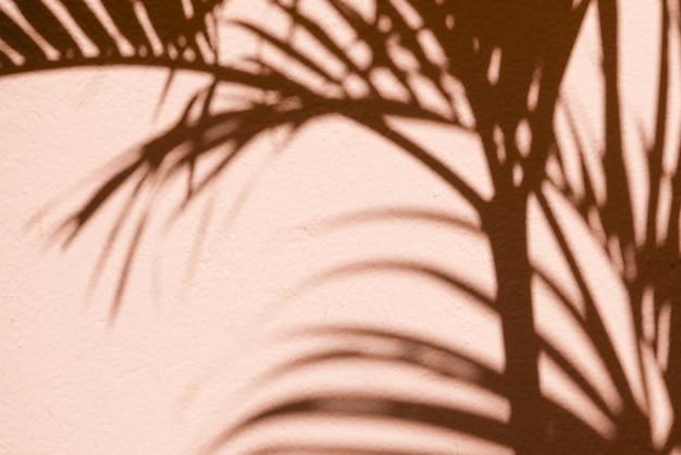 Il textuer astratto della priorità bassa delle ombre frondeggia su un muro di cemento