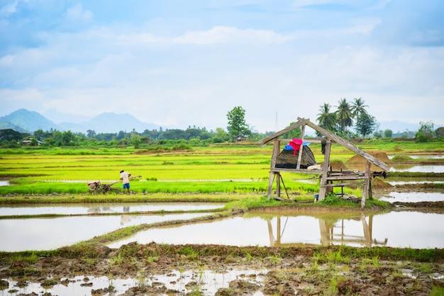 Il trattore di camminata del terreno coltivabile dell'aratro funzionante dell'agricoltore sul giacimento del riso ha preparato per l'asiatico agricolo della coltivazione - risaia che pianta nella stagione delle pioggie