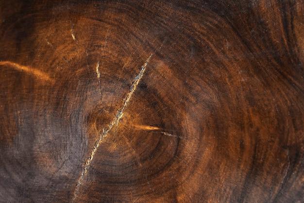 Il tronco di un albero