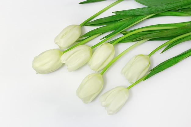 Il tulipano bianco di fioritura fiorisce con le foglie verdi su fondo bianco con lo spazio della copia. vista dall'alto.