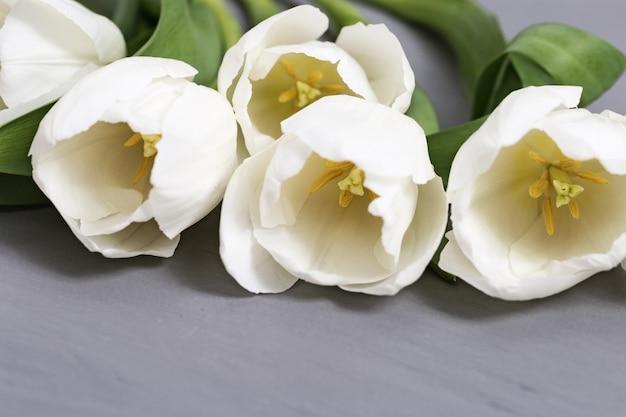 Il tulipano bianco fiorisce il primo piano