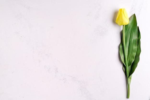 Il tulipano giallo della molla sola fiorisce su fondo di pietra, disposizione piana con lo spazio della copia