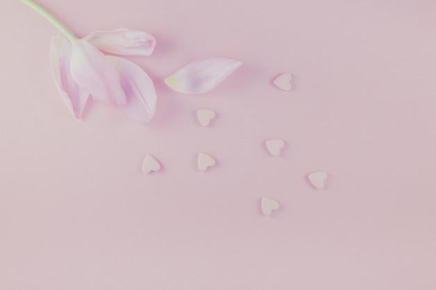 Il tulipano rosa con la caramella del cuore spruzza la disposizione piana