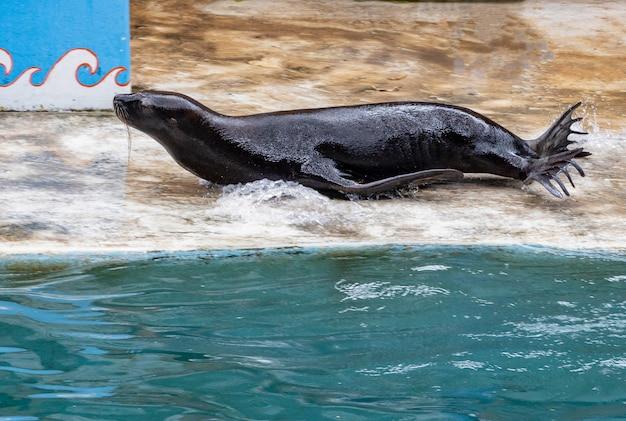 Il turista usa le vacanze per rilassarsi guardando spettacoli di delfini e leoni marini al safari world park, bangkok, tailandia