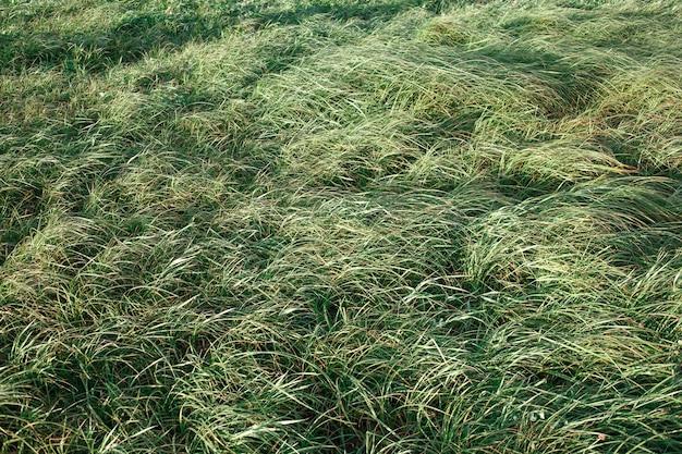 Il vento soffia sul campo di erba verde