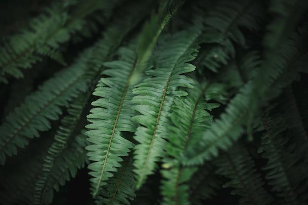 Il verde lascia la priorità bassa del reticolo