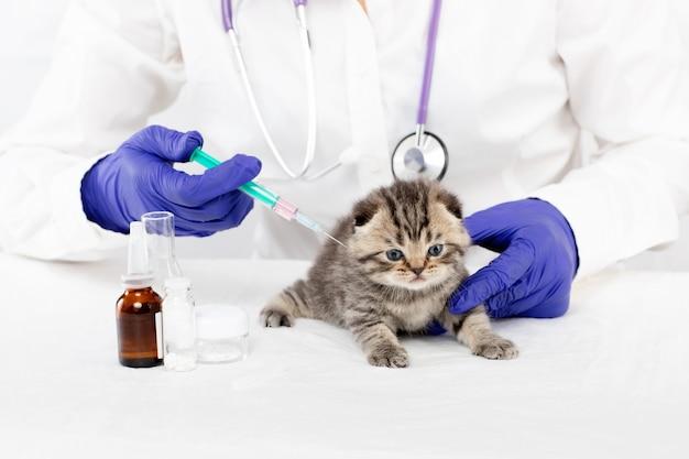 Il veterinario fa un'iniezione a un piccolo gattino in una clinica veterinaria. concetto di medicina