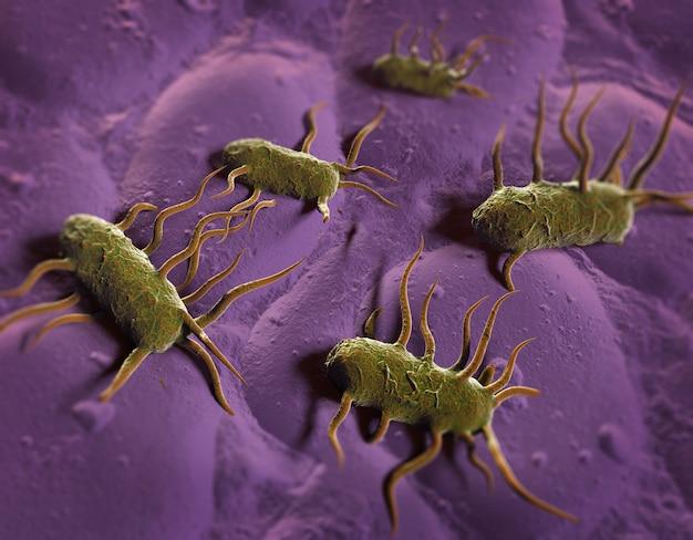 Illustrazione 3d del batterio listeria monocytogenes, batterio gram-positivo con flagello che causa la listeriosi