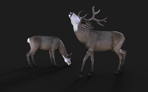 Illustrazione 3d della fauna selvatica dei cervi muli nell'isolato ad ovest americano su fondo nero con il percorso di ritaglio