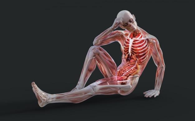 Illustrazione 3d di un sistema muscolare maschile scheletro, osso e apparato digerente con tracciato di ritaglio