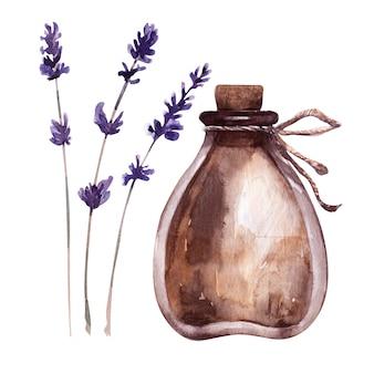 Illustrazione dell'acquerello con fiala e piante aromatiche