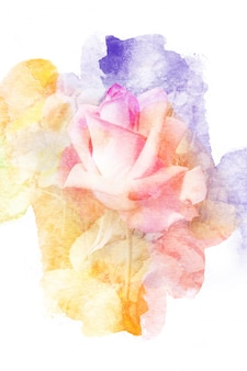 Illustrazione dell'acquerello del fiore.
