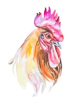 Illustrazione dell'acquerello del gallo isolata
