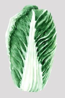 Illustrazione dell'acquerello di cavolo di pechino. teste e foglie