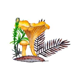 Illustrazione di grandi e piccoli rametti di finferli, fiori, erba, foglie e abeti. pittura ad acquerello