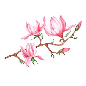 Illustrazione disegnata a mano dell'acquerello del ramo rosa della magnolia