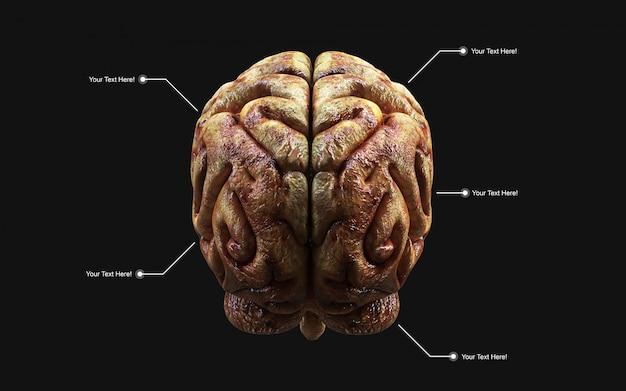 Illustrazione medica 3d del cervello umano nella retrovisione