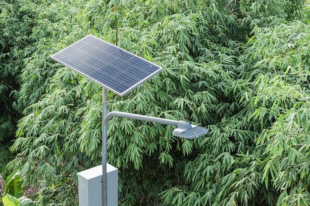 Iluminazione pubblica autoalimentata solare sopra gli alberi di bambù verdi.